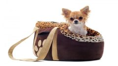 Best Designer Pet Purse