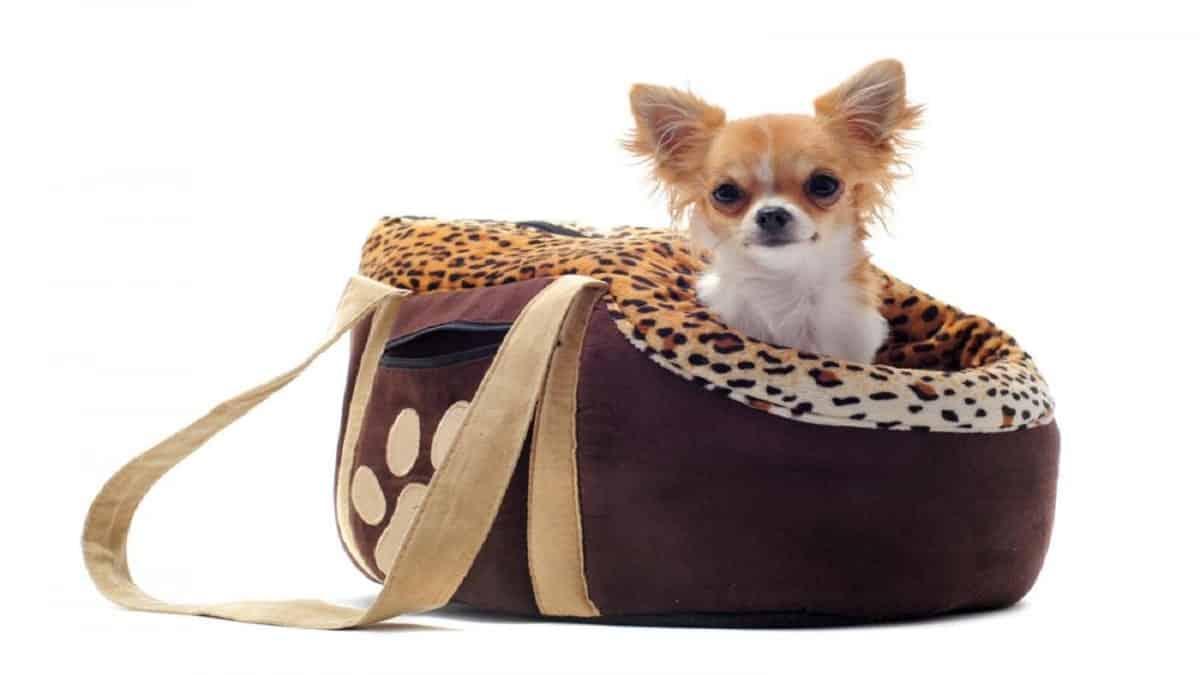 Best Designer Pet Purse